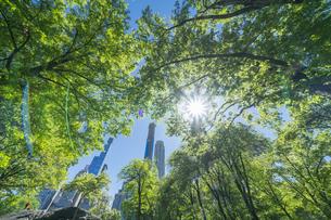 セントラルパークに生い茂る新緑の木々の後ろにそびえ立つミッドタウンマンハッタンの摩天楼を照らす太陽の写真素材 [FYI04606179]