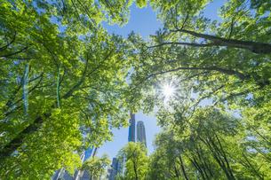 セントラルパークに生い茂る新緑の木々の後ろにそびえ立つミッドタウンマンハッタンの摩天楼を照らす太陽の写真素材 [FYI04606180]