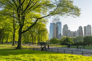 夕日に照らされる芝生の広場に育つ新緑の木々の間の小道を行き交う人々とミッドタウンマンハッタンの摩天楼の写真素材 [FYI04606231]