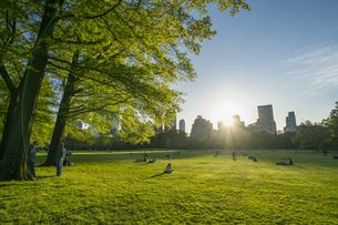 ミッドタウンマンハッタンの摩天楼に沈む夕日に照らされる生い茂る新緑とセントラルパークの芝生の広場 シープメドウで寛ぐ人々の写真素材 [FYI04606233]