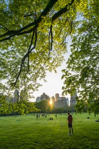 ミッドタウンマンハッタンの摩天楼に沈む夕日に照らされる生い茂る新緑とセントラルパークの芝生の広場 シープメドウで寛ぐ人々の写真素材 [FYI04606246]