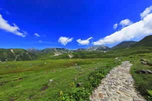 夏の立山 天狗平より雄山などの山々の写真素材 [FYI04606283]