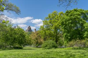 セントラルパークの生い茂る新緑の木と芝生の後ろに見えるセントラルパークウエストの高級住宅街の写真素材 [FYI04606911]