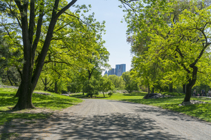セントラルパーク生い茂る新緑の間を走る道と後ろに見えるミッドタウンマンハッタンの摩天楼の写真素材 [FYI04606915]