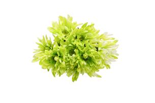 菊の花束の写真素材 [FYI04607030]
