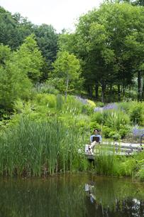 池のほとりで仕事をするミドルの男性の写真素材 [FYI04607165]
