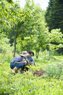 田舎暮らしするカップルの写真素材 [FYI04607230]