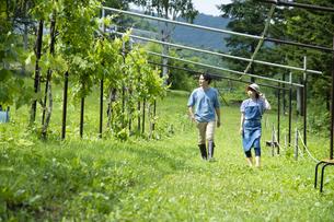 農園を歩くカップルの写真素材 [FYI04607350]