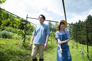 農園を歩くカップルの写真素材 [FYI04607352]