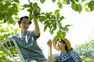 農作業するカップルの写真素材 [FYI04607355]