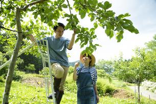 農作業するカップルの写真素材 [FYI04607356]