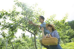 農作業するカップルの写真素材 [FYI04607359]