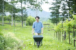 農作業するミドルの男性の写真素材 [FYI04607389]