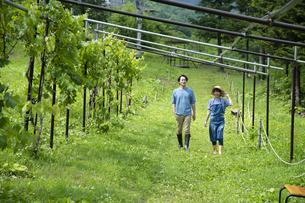 農園を歩くカップルの写真素材 [FYI04607411]