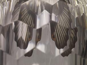 ダイヤモンドに映る蝶の写真素材 [FYI04607473]