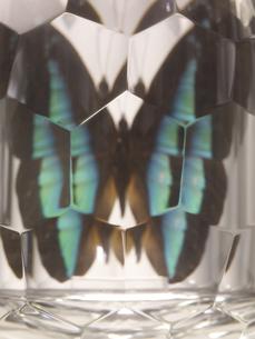 ダイヤモンドに映る蝶の写真素材 [FYI04607474]