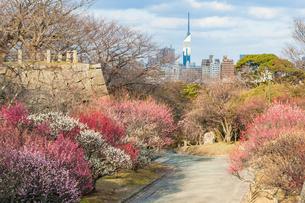 舞鶴公園 梅の咲く季節の写真素材 [FYI04607914]