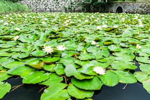 舞鶴公園 睡蓮のある風景の写真素材 [FYI04607918]