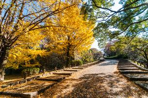舞鶴公園の秋の風景の写真素材 [FYI04607920]