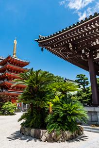 東長寺の五重塔の写真素材 [FYI04607926]