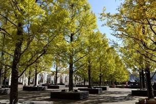 神戸フル-フラワーパーク園内の並木道の写真素材 [FYI04608296]