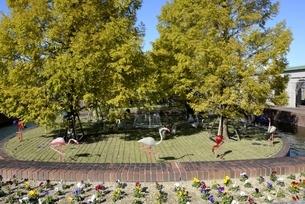 神戸フル-フラワーパーク園内の写真素材 [FYI04608299]