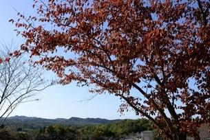 紅葉の神戸フルーツフラワーパーク園内の写真素材 [FYI04608306]