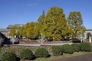青空の神戸フルーツフラワーパーク園内の写真素材 [FYI04608309]