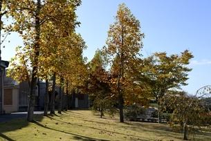 紅葉の神戸フルーツフラワーパークの写真素材 [FYI04608314]