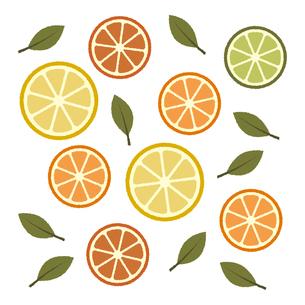 柑橘類のイラスト素材 [FYI04608492]