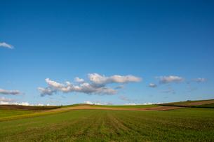 緑の畑作地帯と青空の写真素材 [FYI04608550]