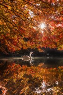 秋色に映えるの写真素材 [FYI04608600]