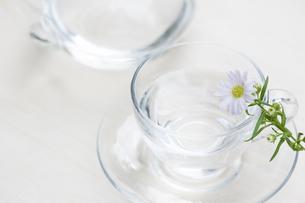 ティーカップと花の写真素材 [FYI04608799]