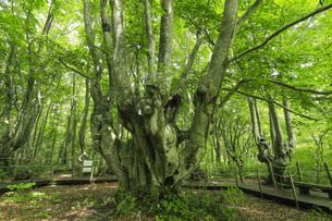 中島台レクリエーションの森 あがりこ大王の写真素材 [FYI04609021]
