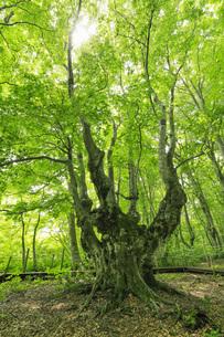 中島台レクリエーションの森 あがりこ大王の写真素材 [FYI04609023]
