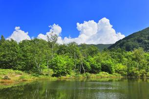 乗鞍高原 まいめの池と夏の空の写真素材 [FYI04609060]