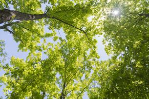 木漏れ日の写真素材 [FYI04609080]
