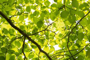 新緑の写真素材 [FYI04609091]