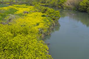 春の河川敷の写真素材 [FYI04609096]