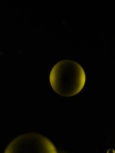 黒背景のしゃぼん玉の泡の写真素材 [FYI04609547]
