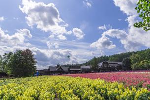 花畑と空の写真素材 [FYI04609580]