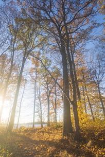 青空の下で逆光に照らされる木々の写真素材 [FYI04609683]