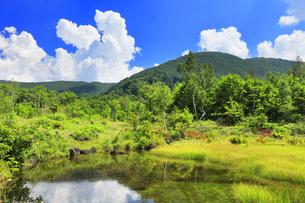 乗鞍高原 偲ぶの池と夏の空の写真素材 [FYI04609827]