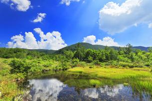 乗鞍高原 偲ぶの池と夏の空の写真素材 [FYI04609829]