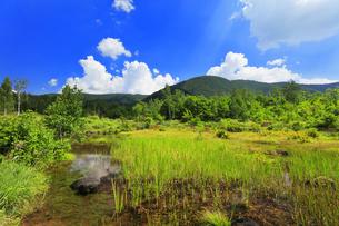 乗鞍高原 偲ぶの池と夏の空の写真素材 [FYI04609830]