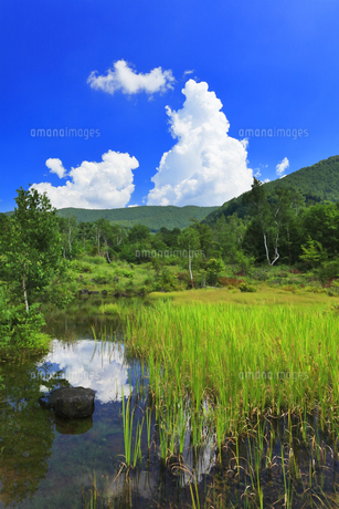 乗鞍高原 偲ぶの池と夏の空の写真素材 [FYI04609831]