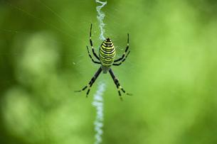 蜘蛛の写真素材 [FYI04610259]