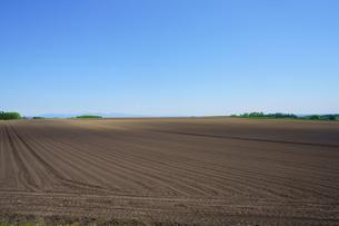 春の畑の写真素材 [FYI04610337]