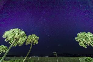 ヤシの木越しに見る満天の星空の写真素材 [FYI04610484]
