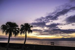 ヤシのシルエットを見る朝焼けの錦江湾の写真素材 [FYI04610491]
